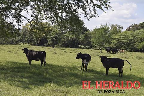 Advierten a los ganaderos sobre Fiscalización del SAT