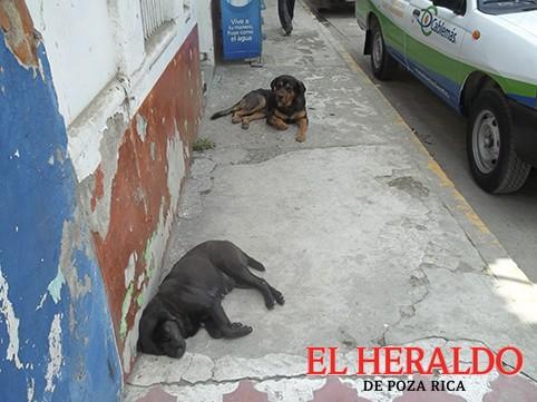 Atenderán problemática por desatención a perros