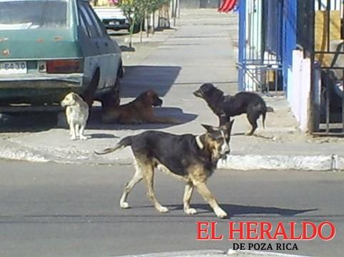 Meterán en cintura a propietarios de perros