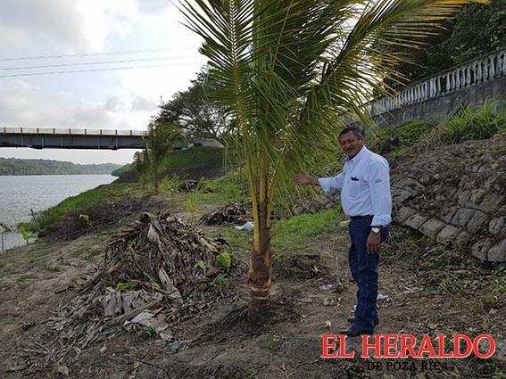 Wilman reforesta la orilla del río
