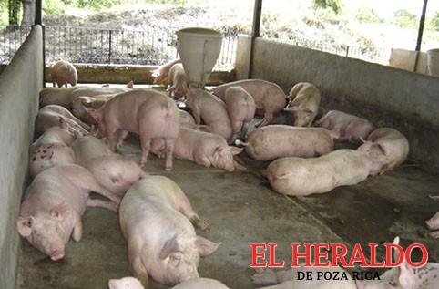 Revisan granjas de animales