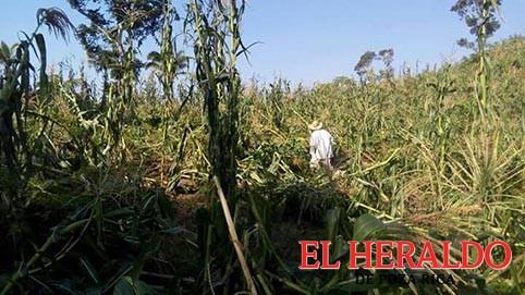 Sedarpa defrauda a los productores indígenas