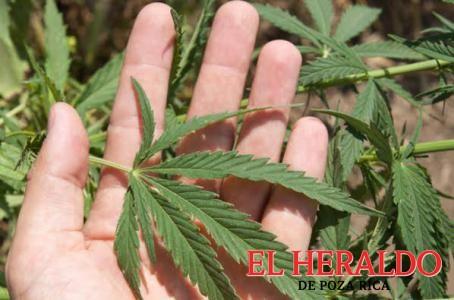 Aprueban uso medicinal de la mariguana