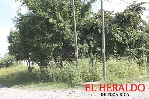 Se apropian de áreas verdes en la Allende