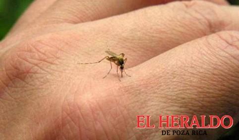 Confirmados seis casos de dengue