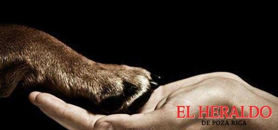 Urgente la aplicación de Leyes de protección animal