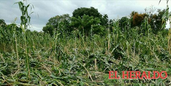 """Katia"" afectó seis mil hectáreas de maíz"