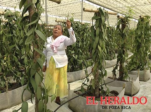 Vainilla en peligro de extinción: Araceli Pérez