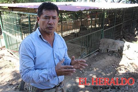 Falsa la fuga de un puma en Tihuatlán