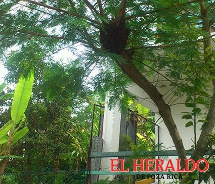 Ataque de abejas en el barrio del Zapote