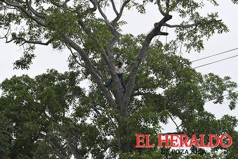 Ahogado el niño a derribar árbol