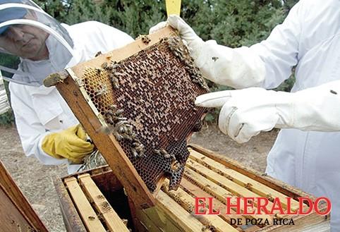 Incertidumbre entre apicultores