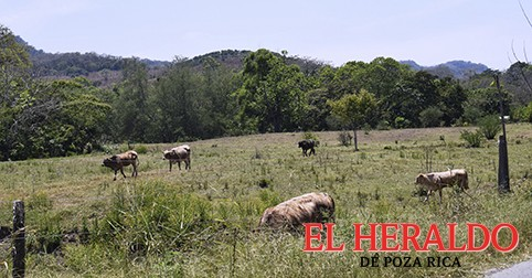 Evitan mortandad de ganado