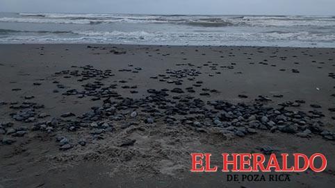 Playas de Tecolutla, el milagro de la vida