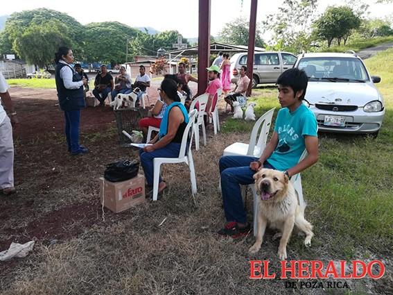 A esterilizar perros y gatos