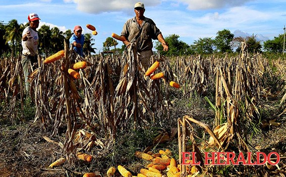 Productores buscan integrarse a PIMAF
