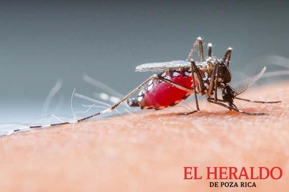 Alerta por chikungunya