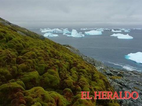 La Antártida se está volviendo verde