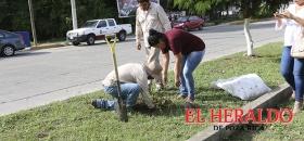Continúa programa municipal de reforestación