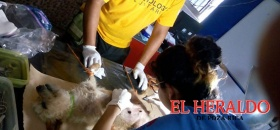 Buscan erradicar sobrepoblación de perros en Tecolutla