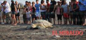 Salvan tortugas
